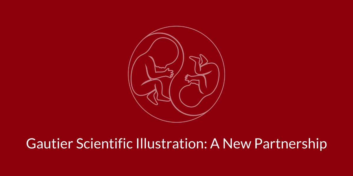 taps support twin anemia polycythemia sequence gautier scientific illustration partnership